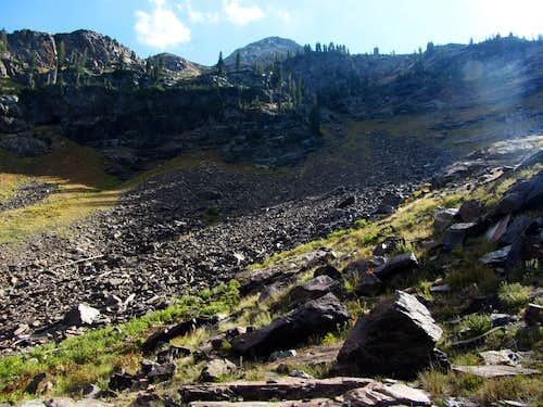 Dromedary descent