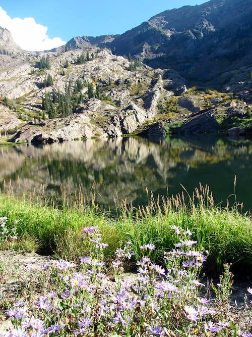 Lake Lillian wildflowers