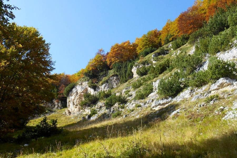 Hidden forest glade