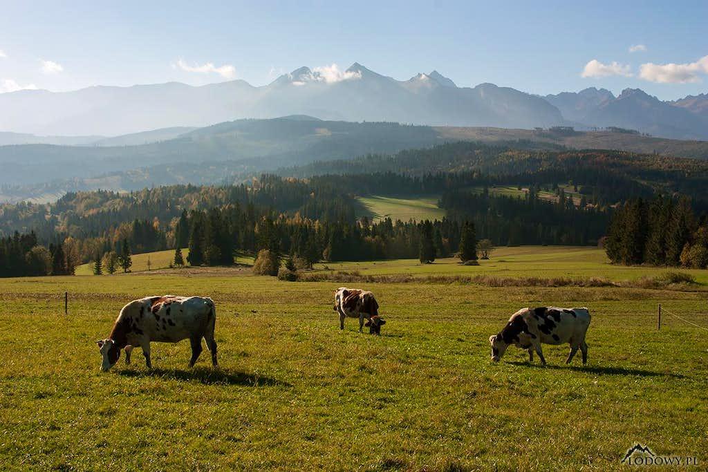 October morning on Lapszanka pass