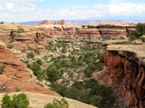 Branch of Big Spring Canyon