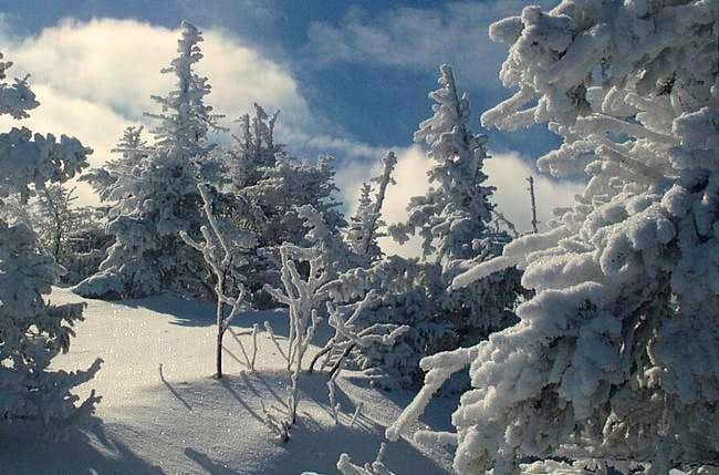 Nice shot of the snow covered...