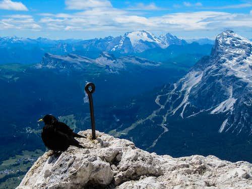 Alpine Chough and the Queen Marmolada
