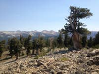 Looking N from near Sheep Mtn summit area