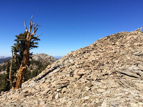 A sampling of terrain along the North Ridge route to North Maggie