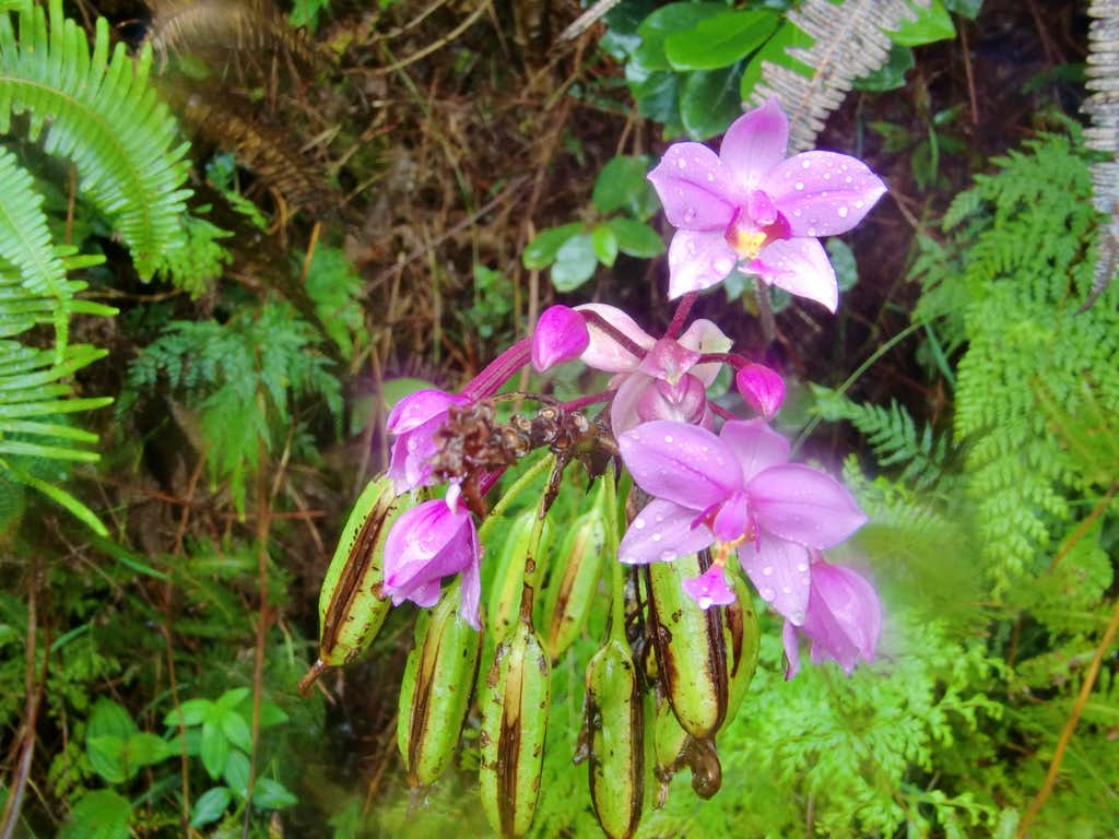 Nice mountain flowers
