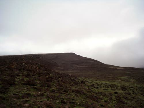 Looking up Skyline Ridge