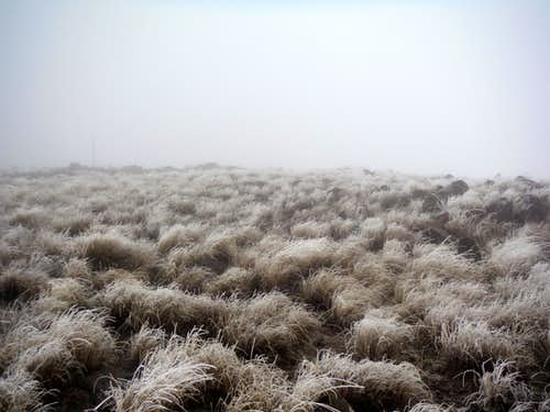 Rime ice on the grassland