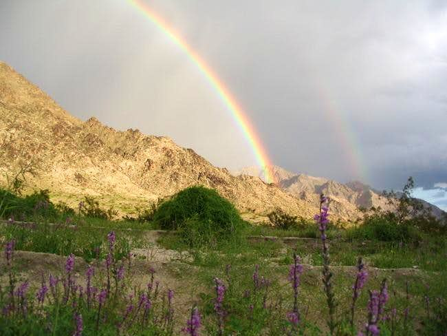 Rainbow, Lupines and...