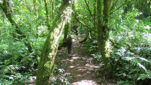 Trail to Volcan San Pedro