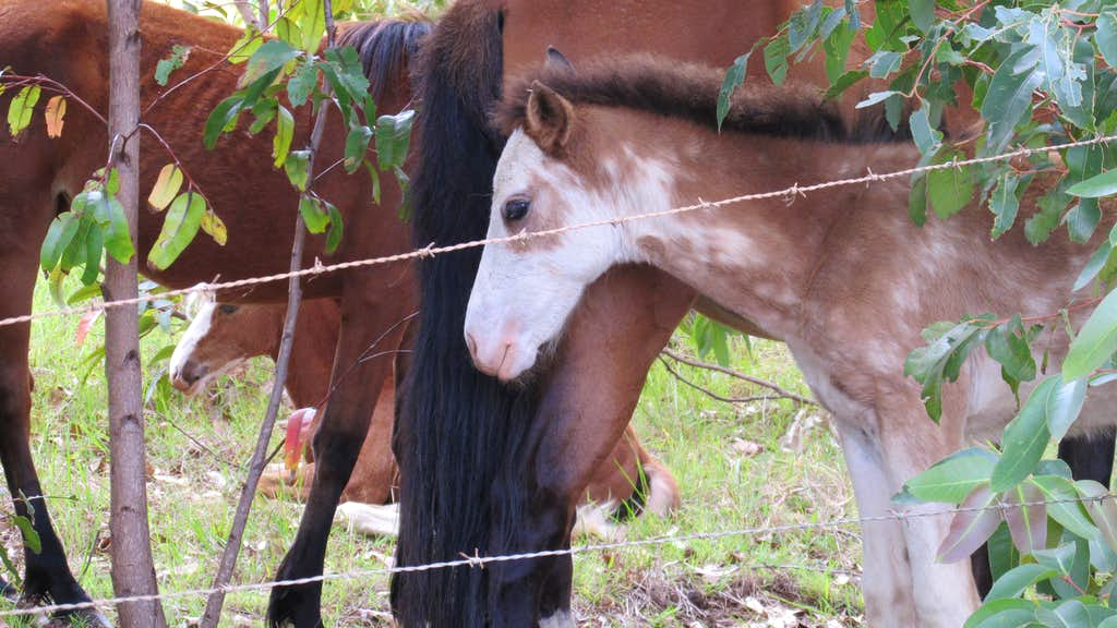 Horses Terevaka Trail