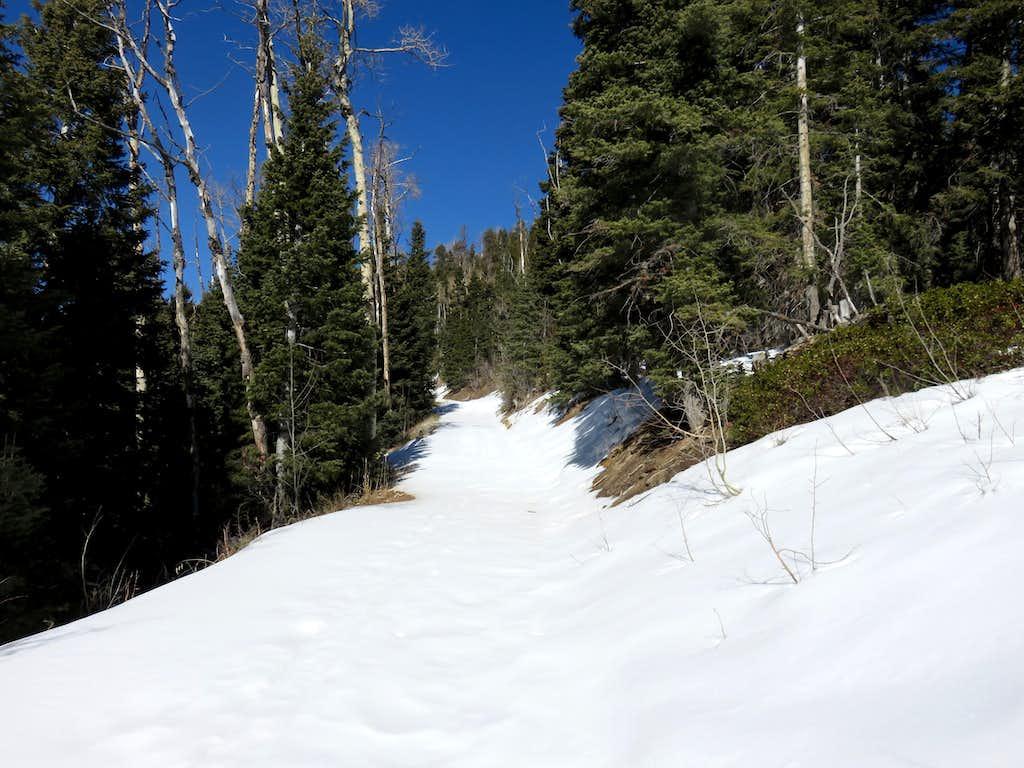 Hiking up Crystal Springs Road in snow