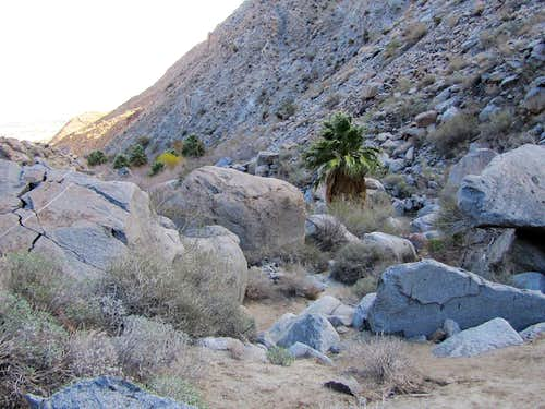 Hellhole Canyon Palms