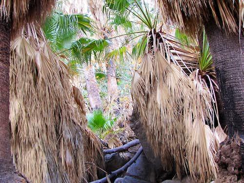 Bushwhacking among the palms