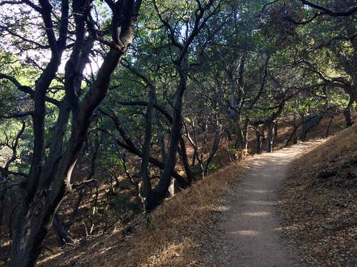 The trail leads through shaded oaks on its way up the mountain.