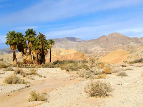Seventeen Palm Oasis