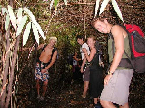 Bamboo walkway
