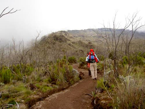The trail from Machame camp...