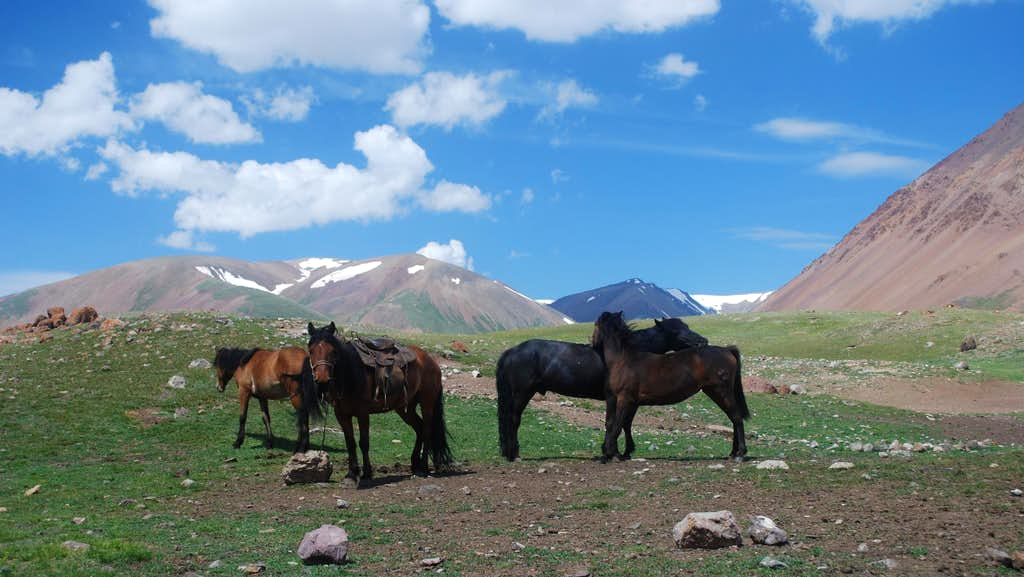 Pack horses in Altai Tavan Bogd National Park