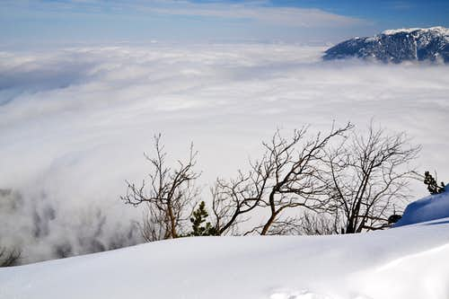 Above the inversion cloud on the Predigtstuhl