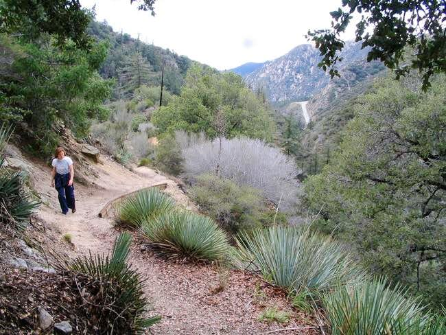 Along the Colby canyon trail,...