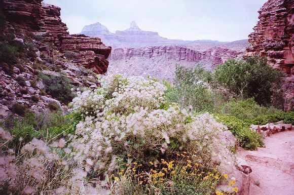 Desert in bloom along Bright...