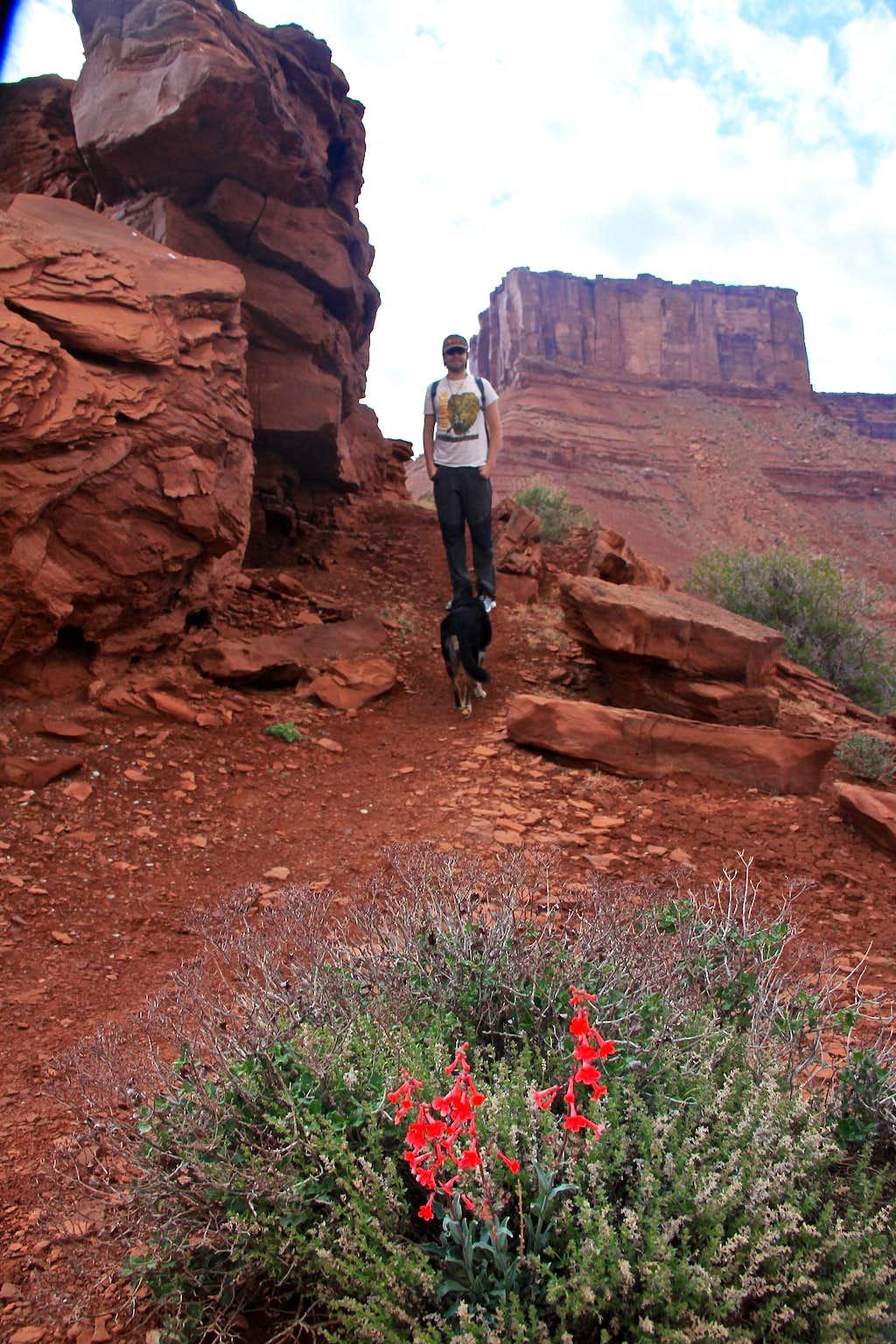 Parriott Mesa hike