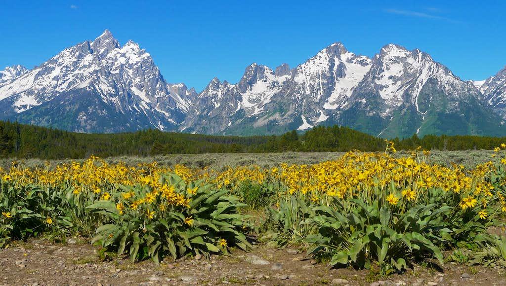Grand Teton and flowers