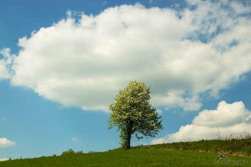 Subcarpathian springtime