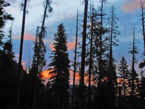 Sunrise through burn trees