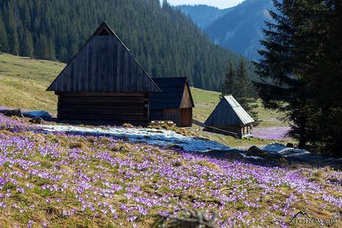 Chocholowska huts