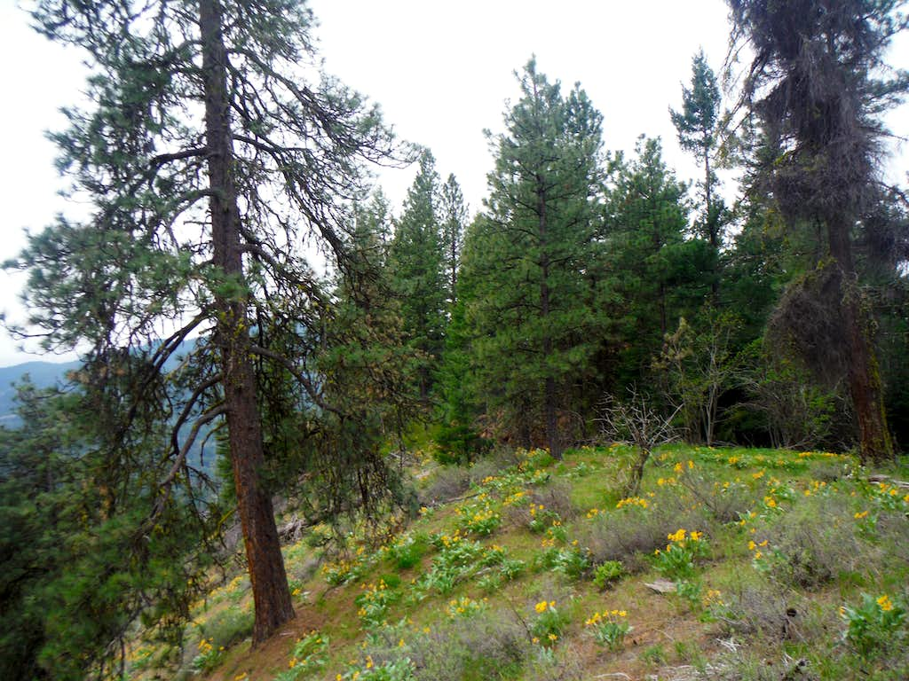 More slopes of Balsamroot