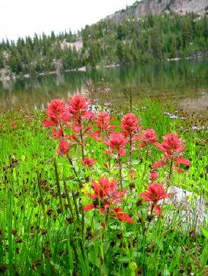 Kamas Lake and wildflowers....