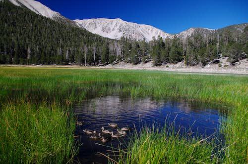 Ducks Below Jepson Peak and Little Charlton