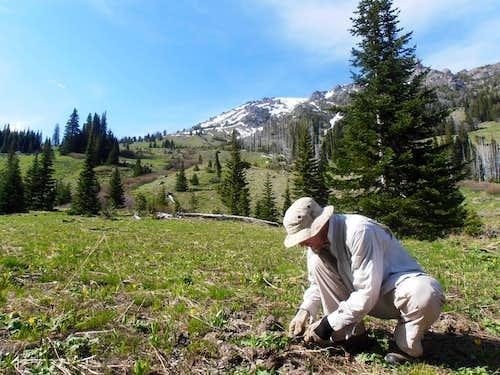 Gardening on Gardner