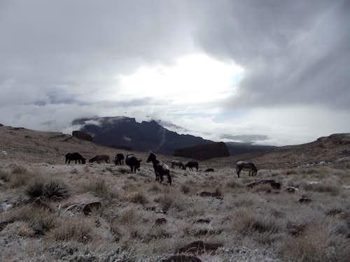 Mafadi in snow with donkeys