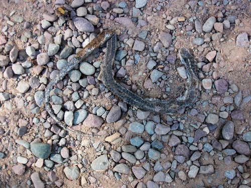 Other dead snake