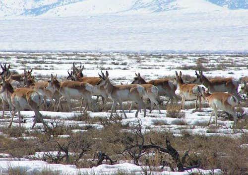 Close up of antelope in the...