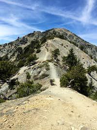 Devil's Backbone Trail and Mt. Harwood