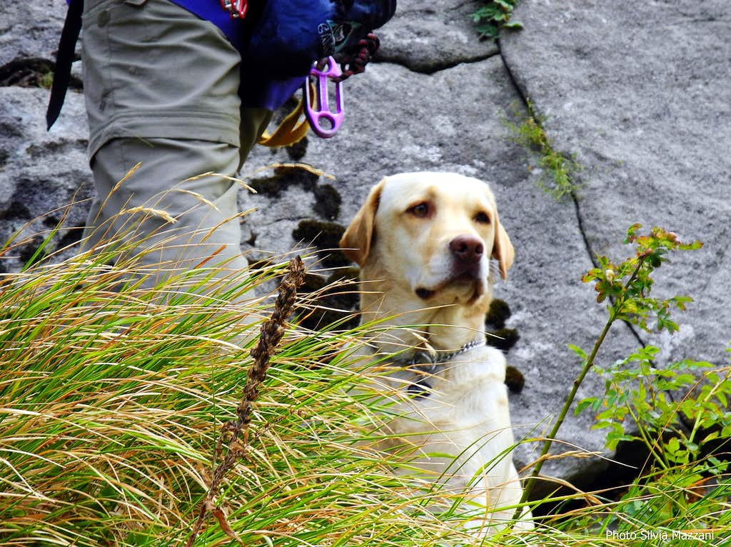 Honey waiting patiently under the cliff...