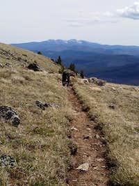Upper Albert Camp trail