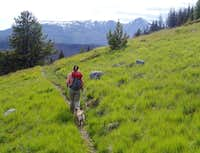 Lower Albert Camp trail