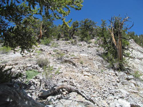 steep terrain on the lower ridge