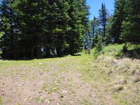 Small meadow at trail junction