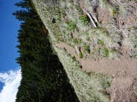 Looking up the shorter steeper trail