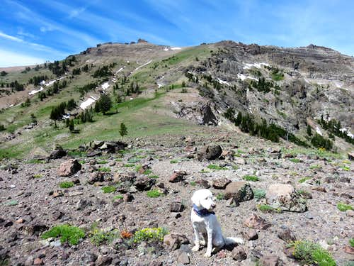 Tahoe (the dog) below the east ridge route on Thimble Peak