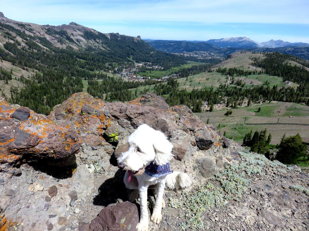 Tahoe (the dog) atop Point 8947 above Kirkwood