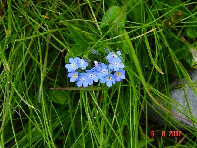 Flowers are abundant enroute...
