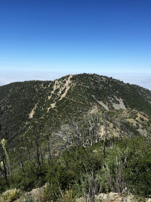 Mt. Lowe from Mt. Markham