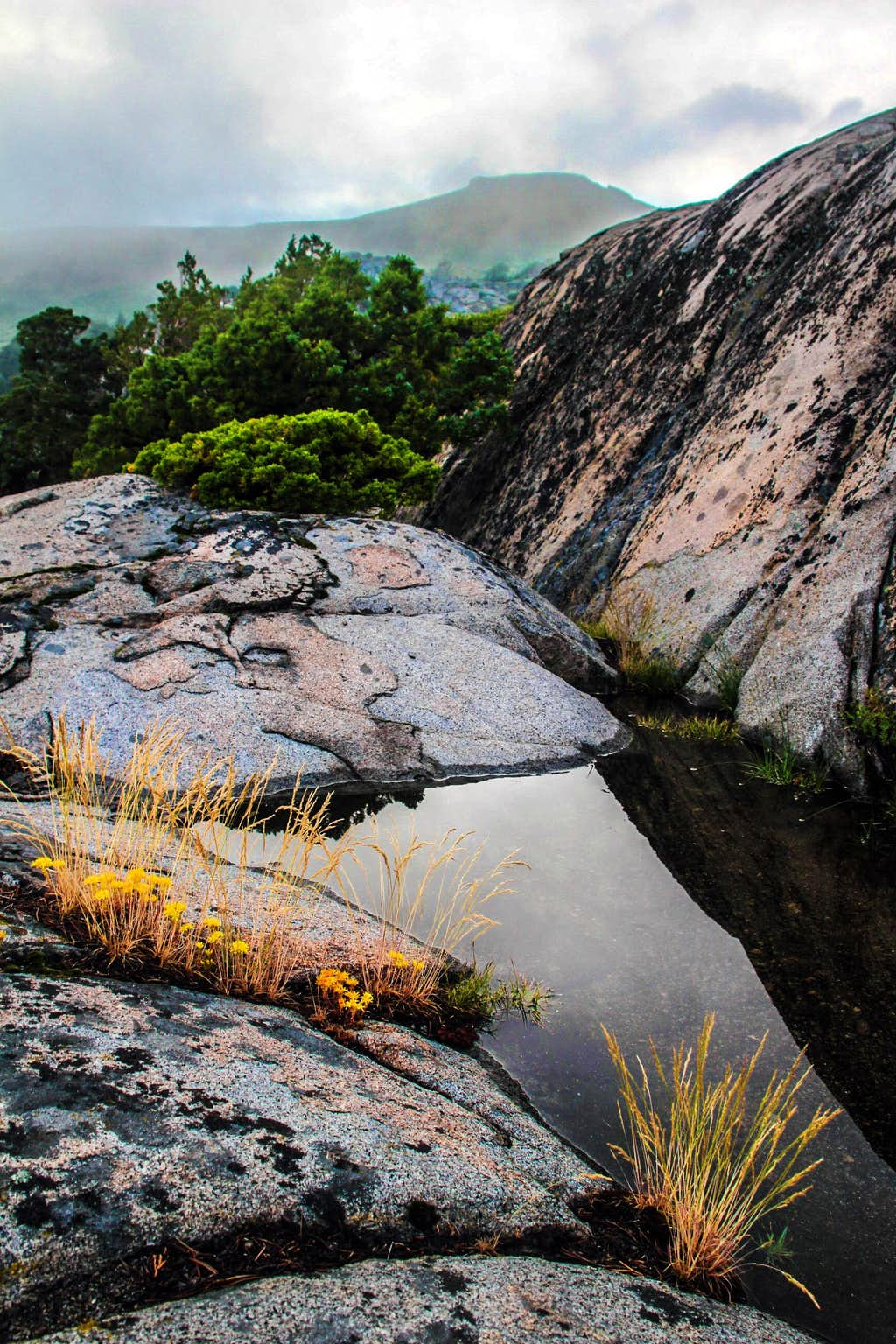 Rainwater pond